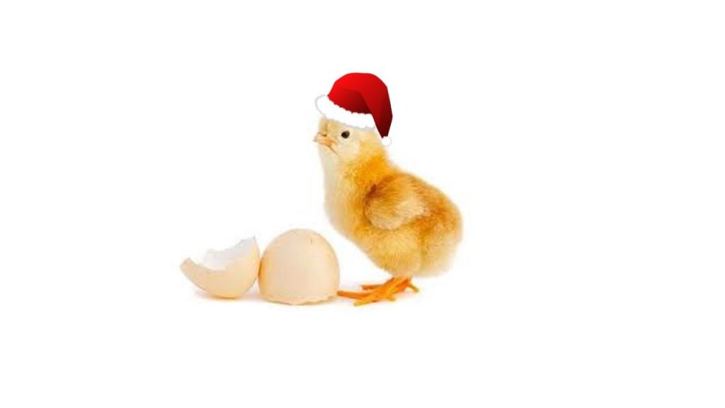 xmas-chicken-jpeg